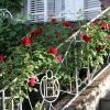 huis-broeckmeulen-tuin-04